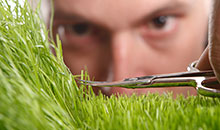 Lawn Trimming